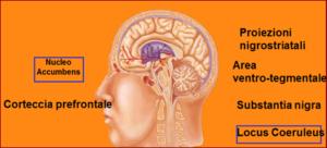 Cervello e dipendenza